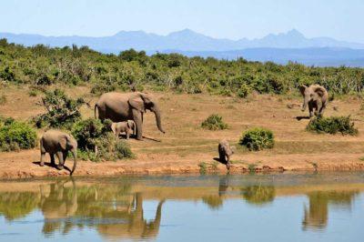 africa-elefanti